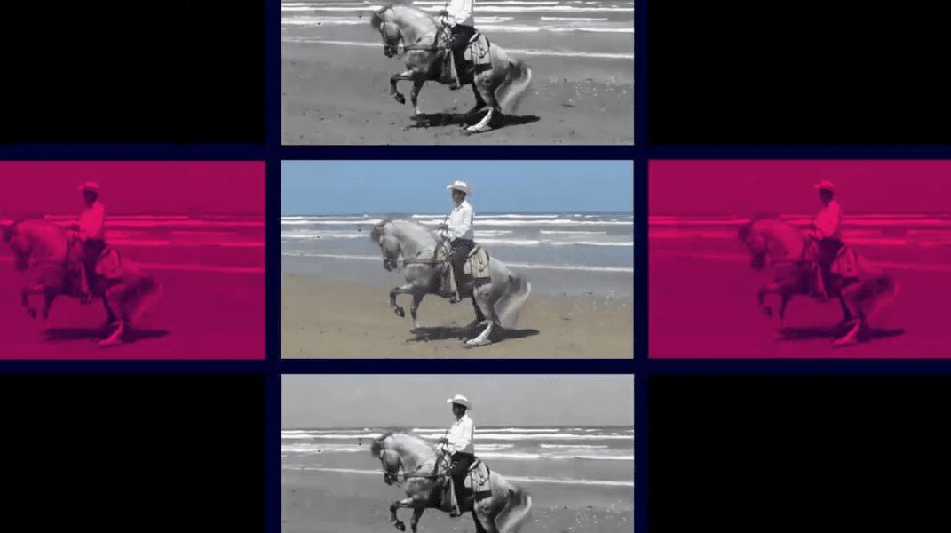 Horse dancing on a beach