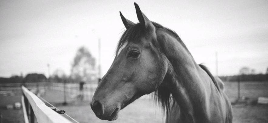 British Equine Influenza